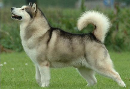 Top 10 most dangerous dog breeds in the world 2017 world for What are the best dogs in the world