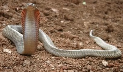 know 10 of the most venomous snakes in the world world blaze