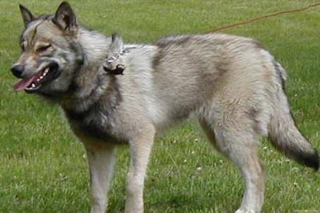 Top 10 Most Dangerous Dog Breeds In The World World Blaze