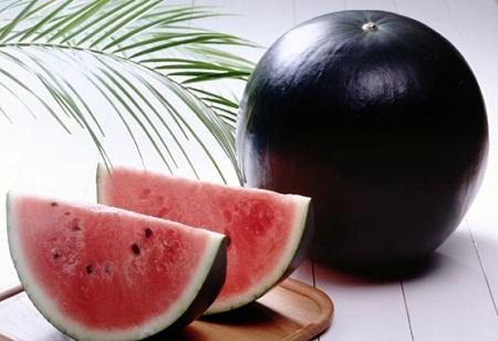 Japanese Densuke Melon