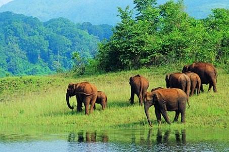 Periyar National Park, Kerala