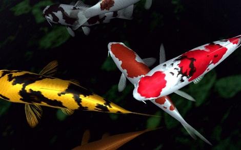 10 of the longest living animals on earth world blaze for Koi fish life span