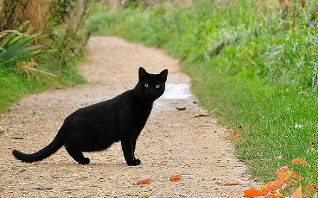 black cat crosses your way