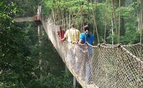Kakum National Park Canopy Walkway - Ghana