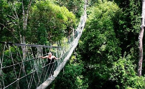 Taman Negara National Park - Malaysia