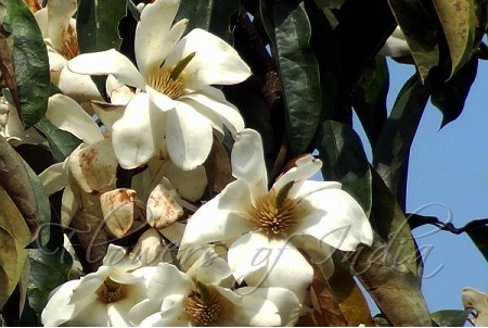 Top 20 Most Beautiful Flowers Commonly Found In India World Blaze