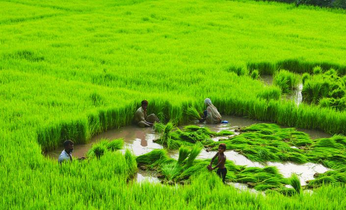 Top 10 Largest Rice Producing States In India 2017 World Blaze