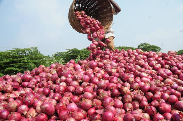 Onion Producing States In India