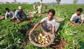 Potato Producing States in India