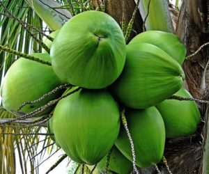 Top 10 Largest Coconut Producing States in India