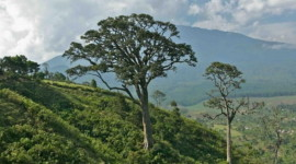 Torrid Evergreen Forests
