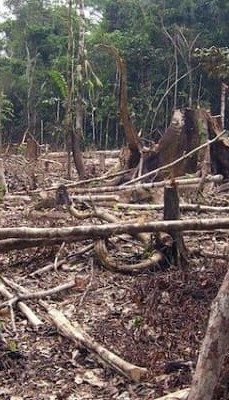Countries with highest Deforestation
