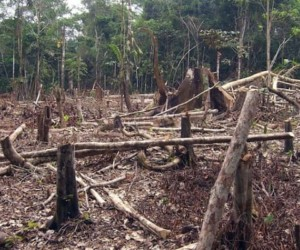 Top 10 Countries with Highest Deforestation Rate in the World 2017