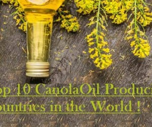 Top 10 Canola Producing Countries in the World 2017-18