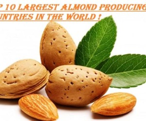 Top 10 Largest Almond Producing Countries in the World 2017-18
