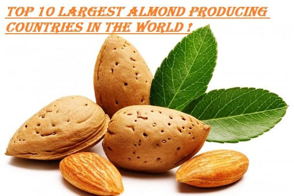 Largest Almond Producing Countries