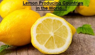 Lemon Producing Countries